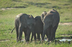 DAYS 6, 7 & 8 - ELEPHANTS