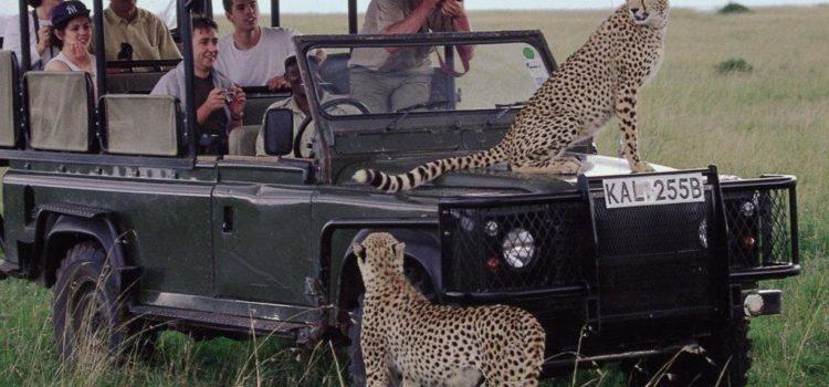 4 Star Safari + Gorilla Trek in East Africa and Rwanda