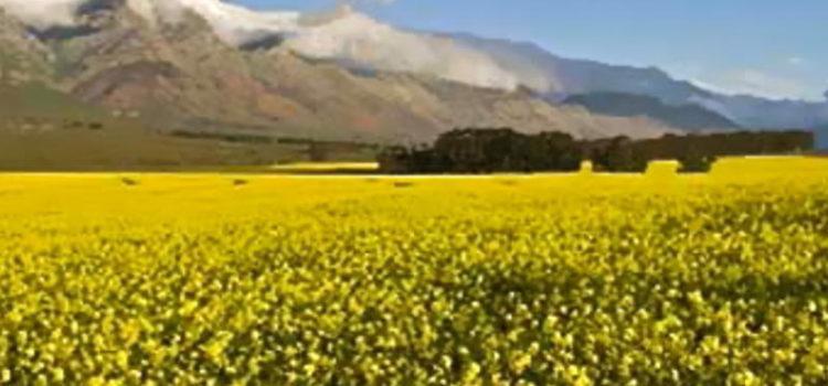 Die Swartland